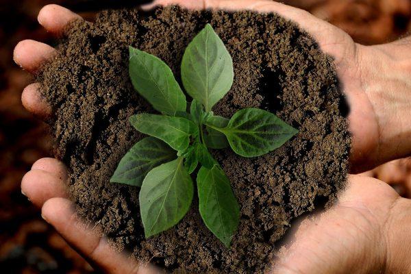 Nachhaltigkeit (Foto: Annca)